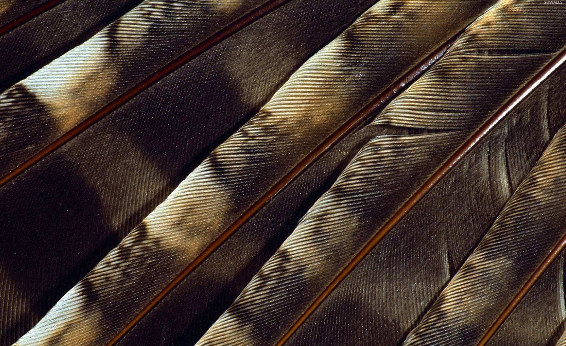Brown feathers close-up wallpapers HD quality