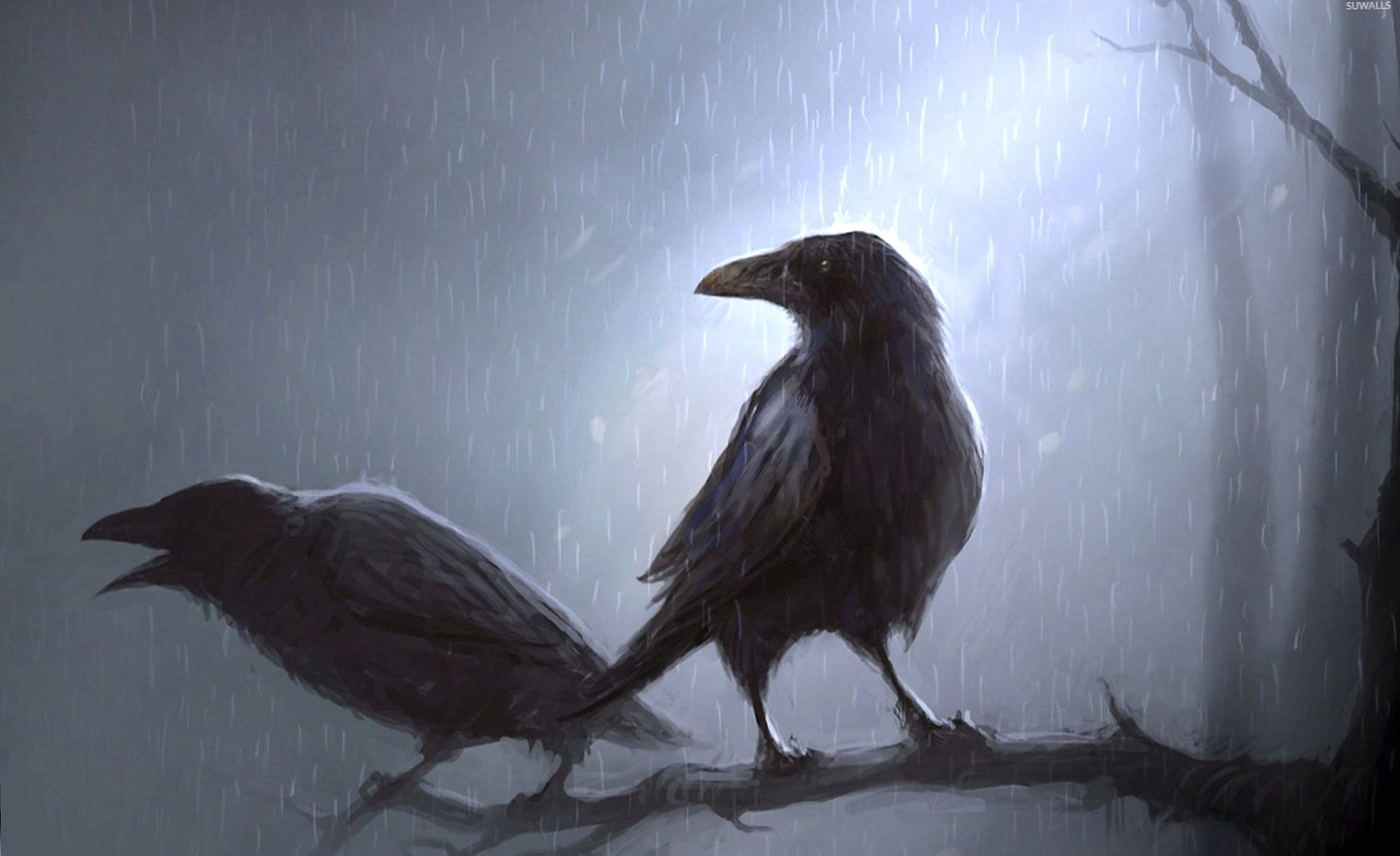Crows standing in the rain on the branch wallpapers HD quality