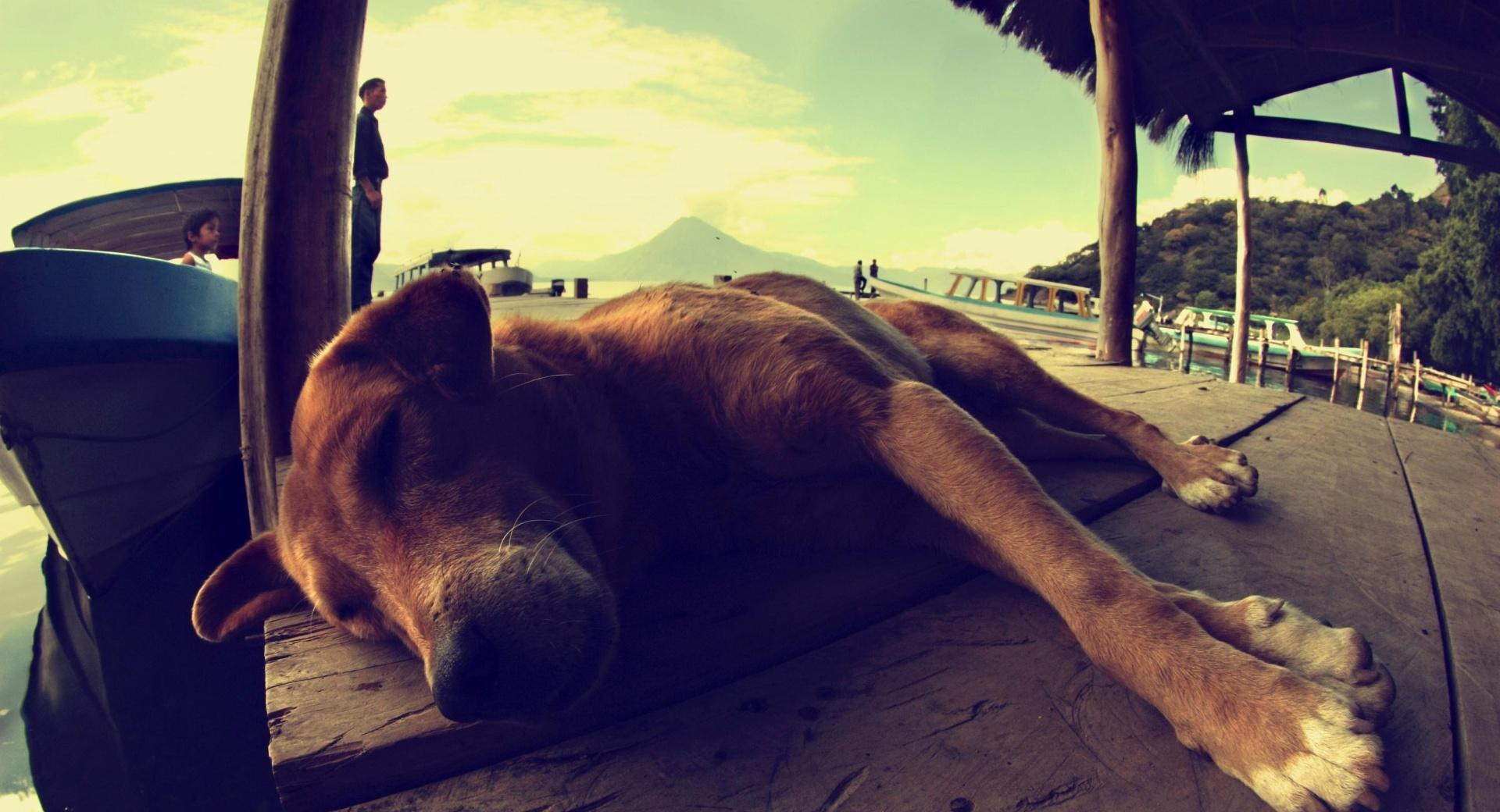 Dog Sleeping On A Pontoon wallpapers HD quality