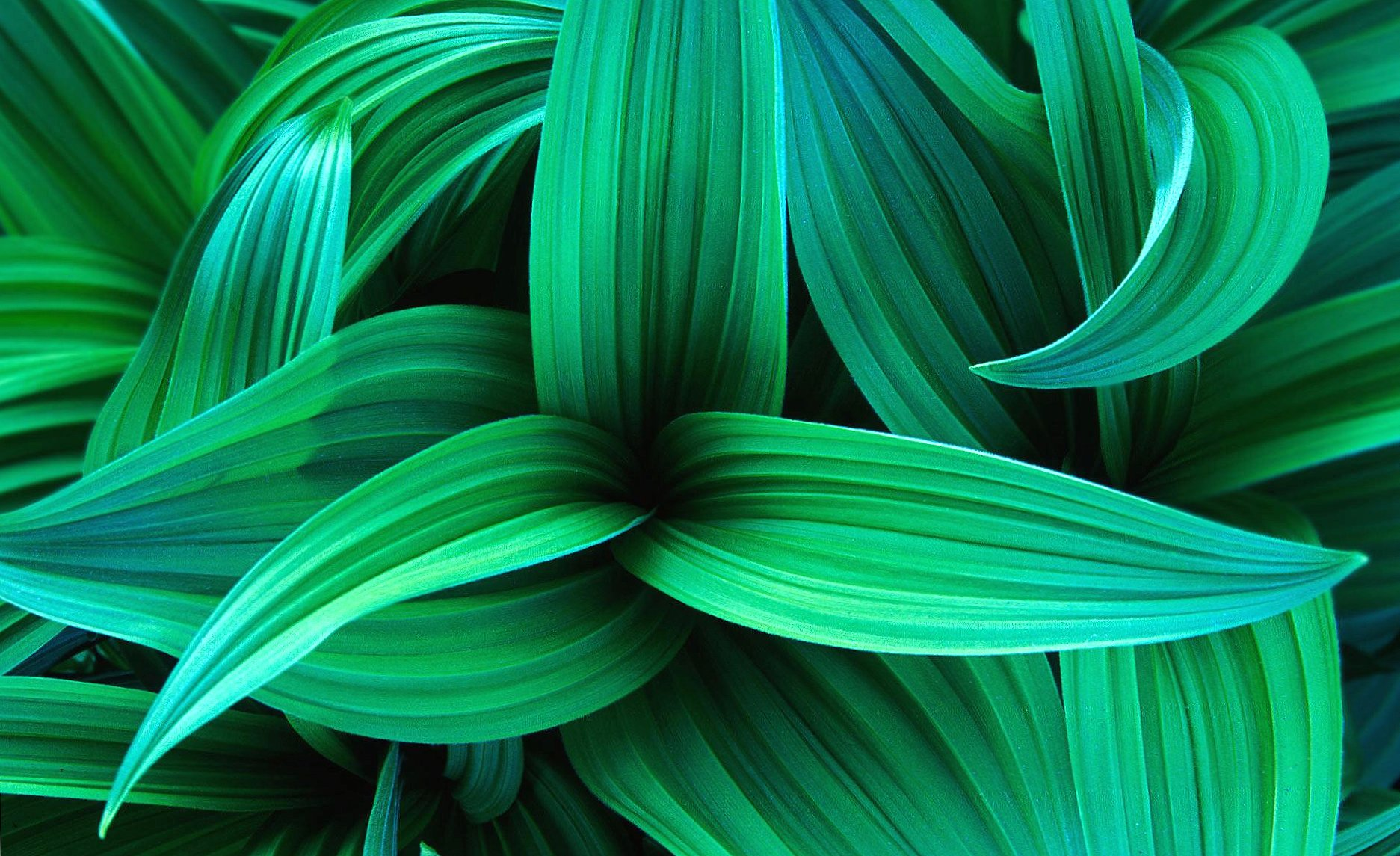 Exotic green leaves wallpapers HD quality