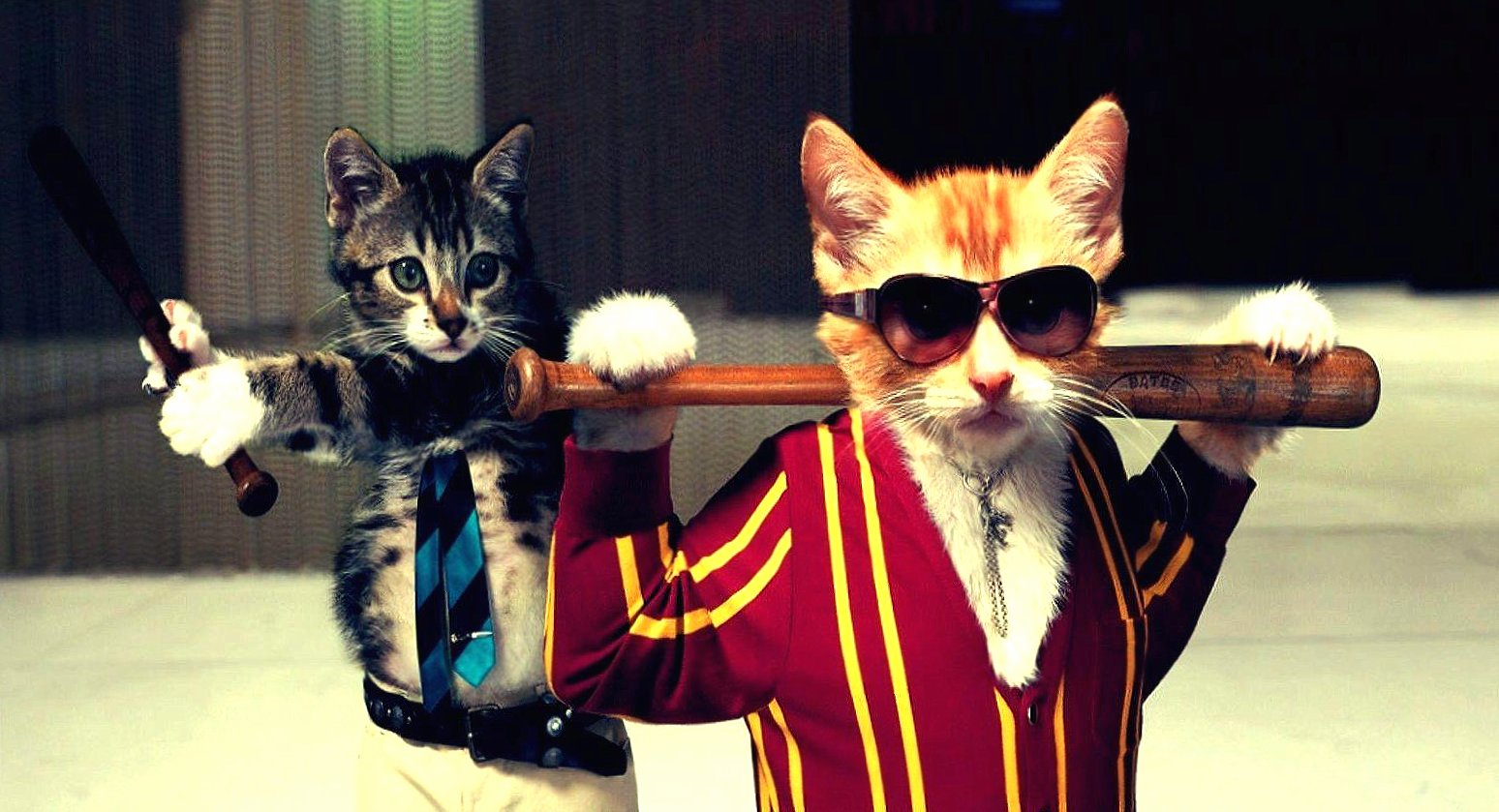 Funny cats gangsters baseball wallpapers HD quality