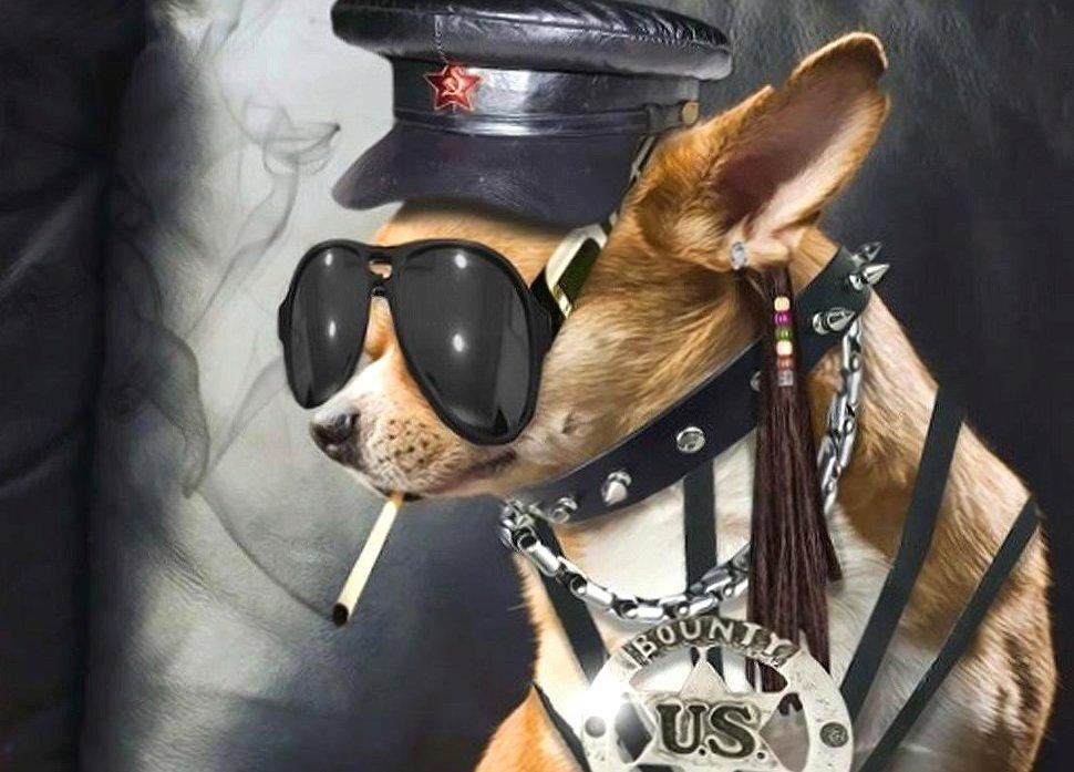 Funny dog badboy wallpapers HD quality