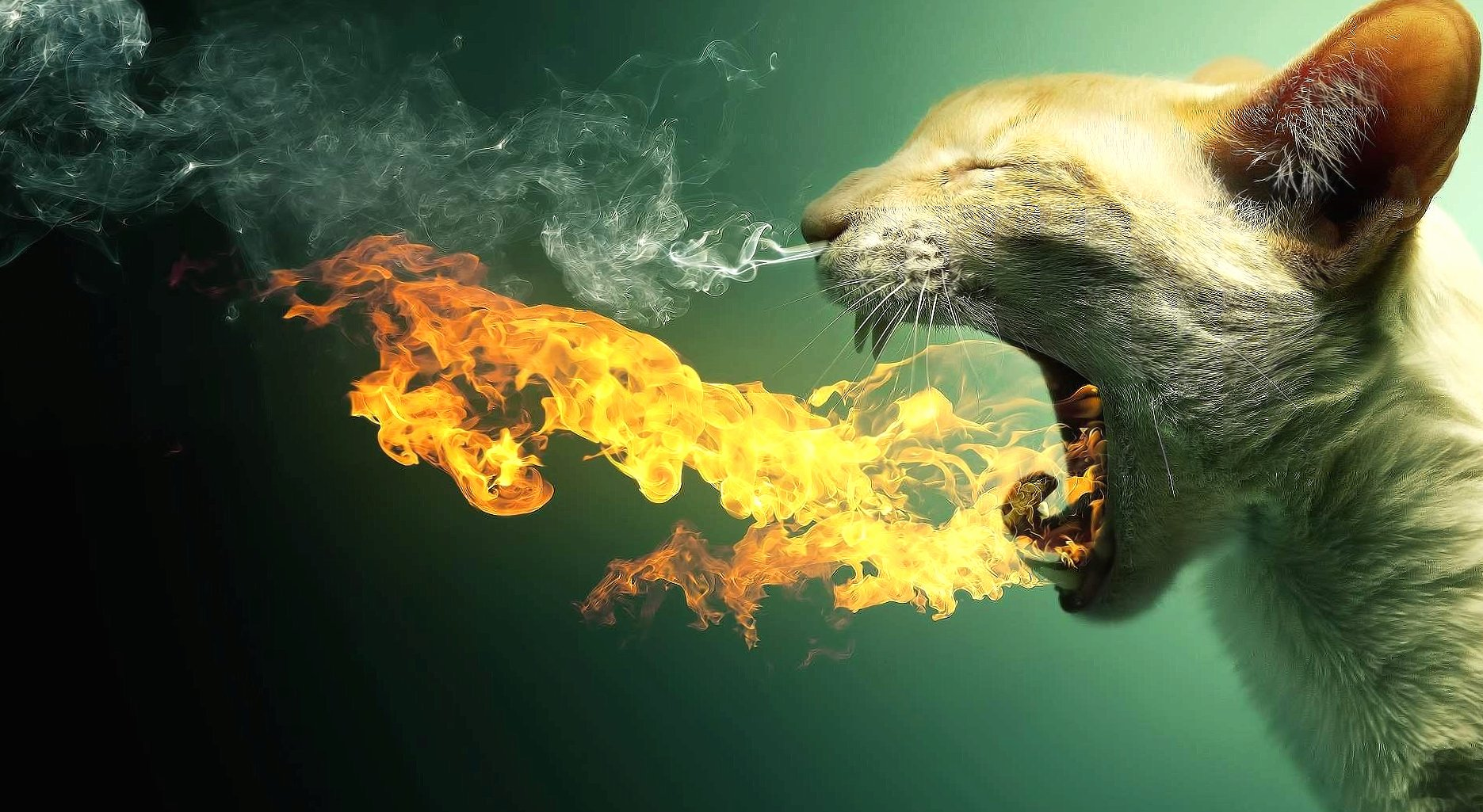 Funny flaming cat wallpapers HD quality