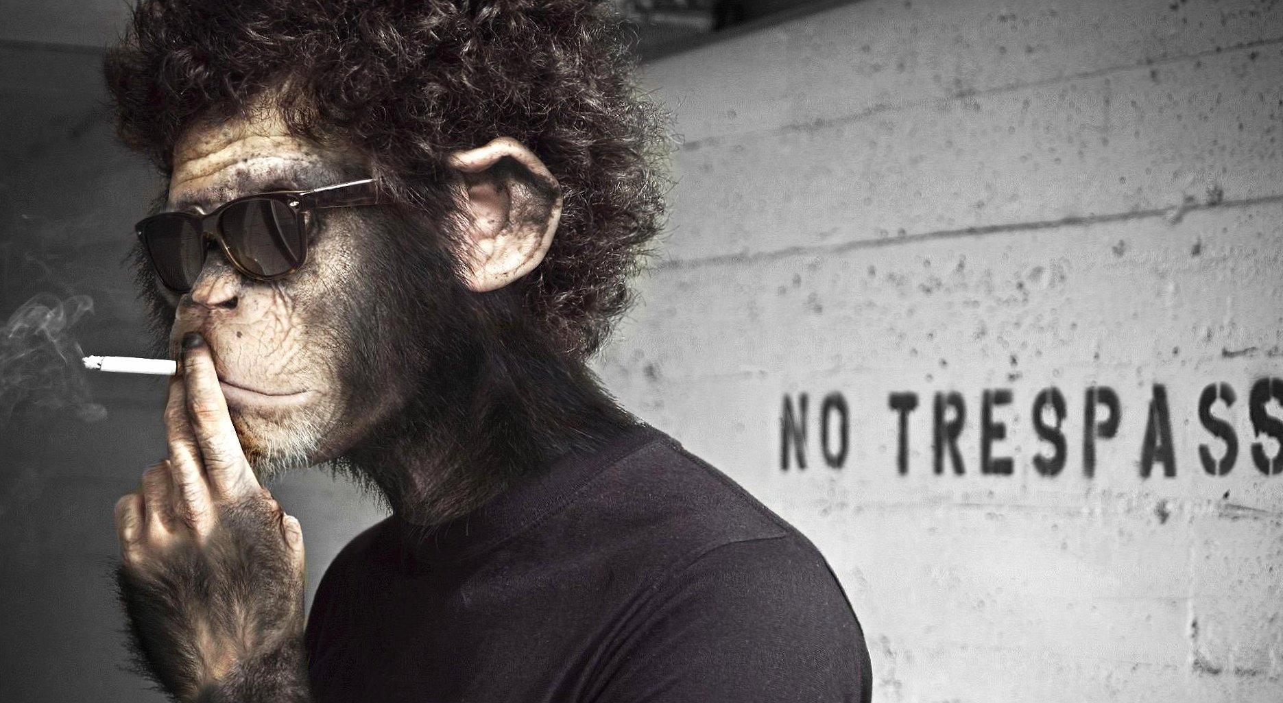 Funny smoking monkey like banksy wallpapers HD quality