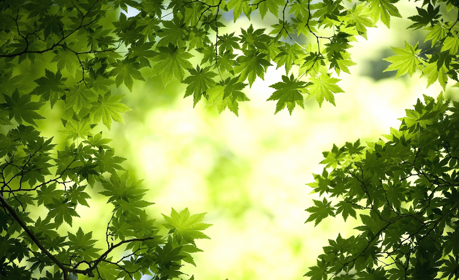 Green leaves spring wallpapers HD quality