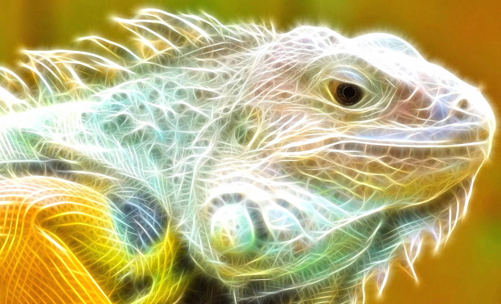 Iguana 3d digital art wallpapers HD quality
