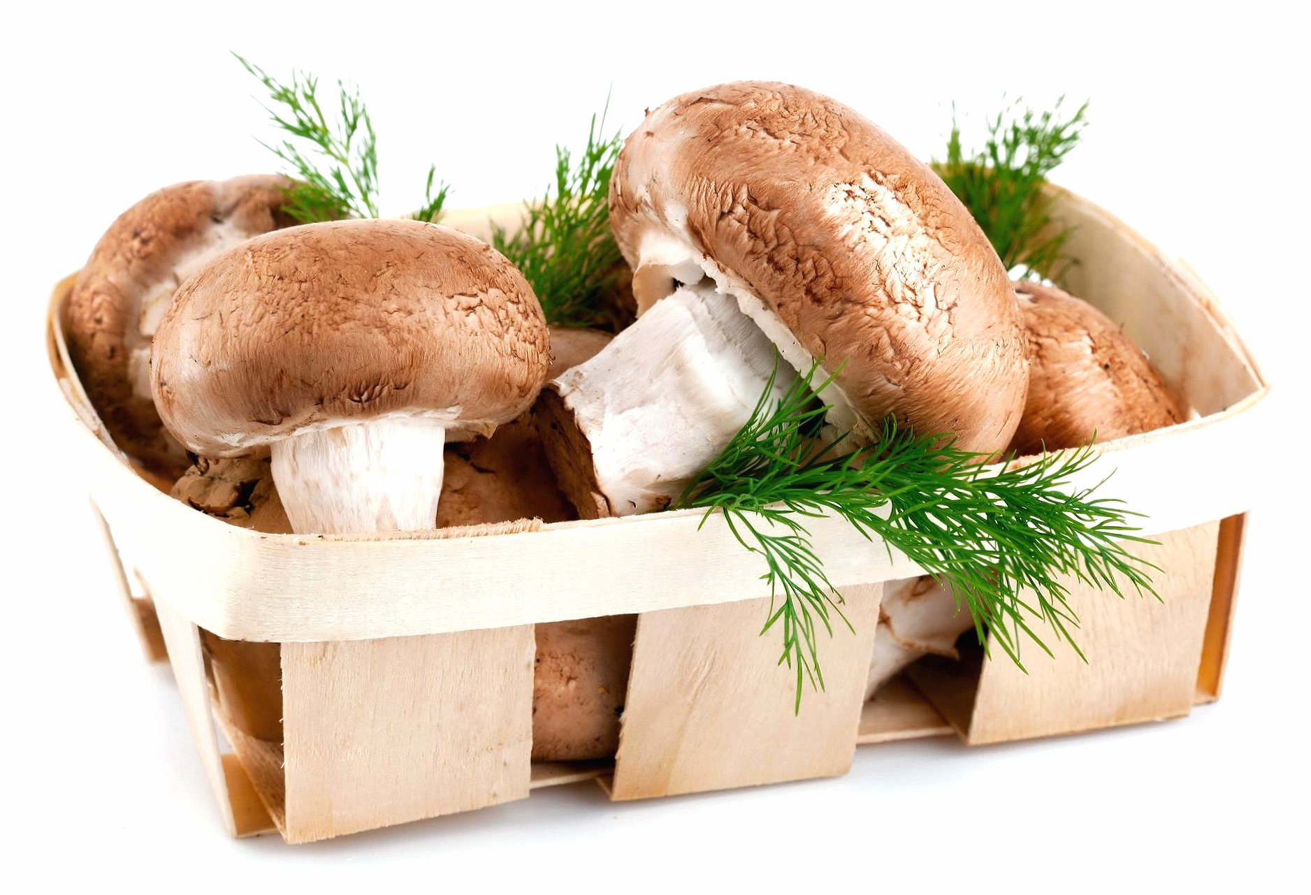 Little basket of mushrooms wallpapers HD quality