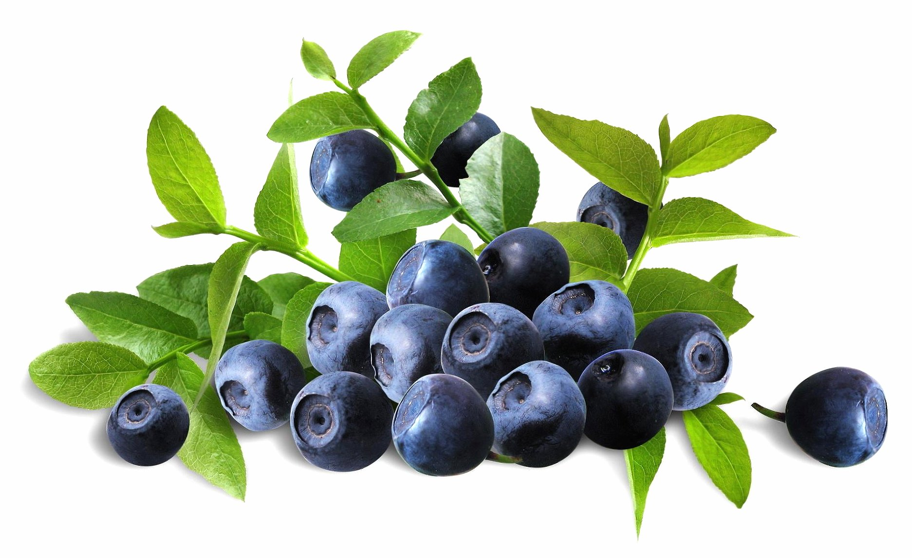 Perfect blueberries wallpapers HD quality