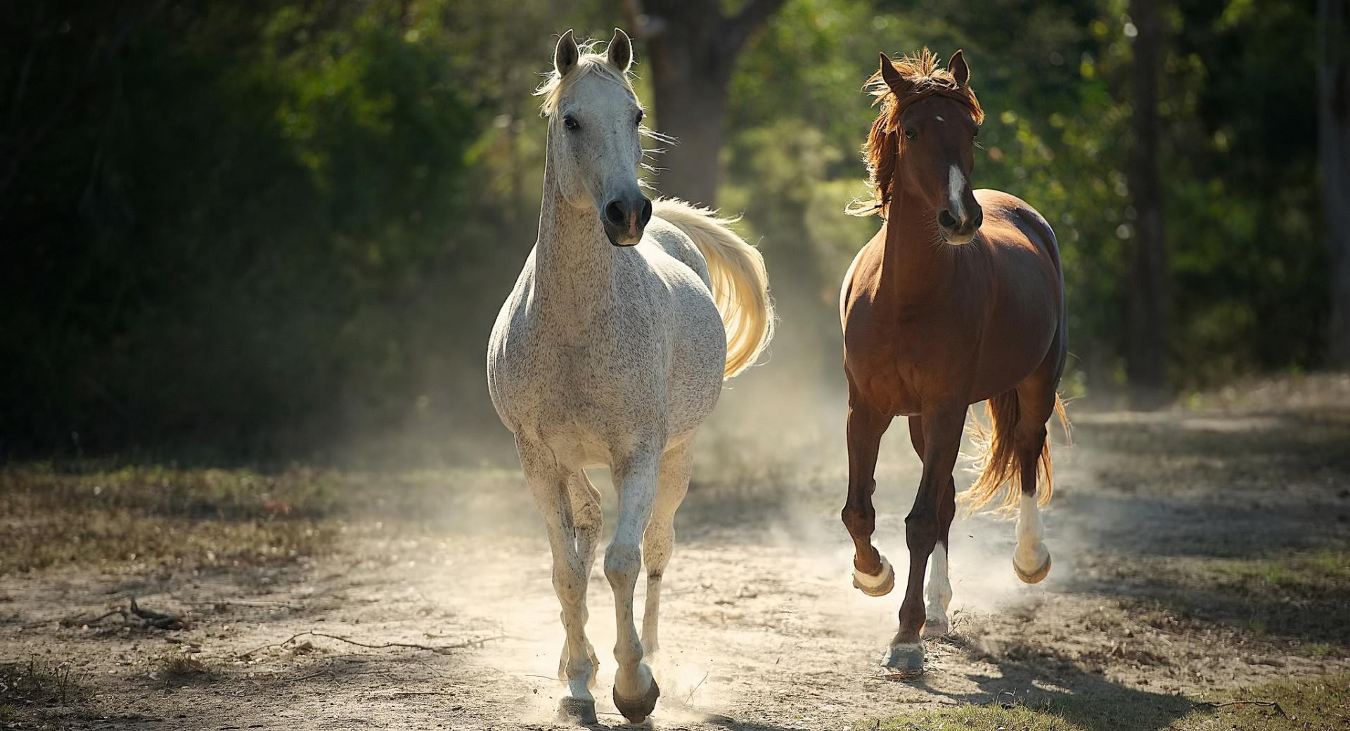 Runaway Horses wallpapers HD quality