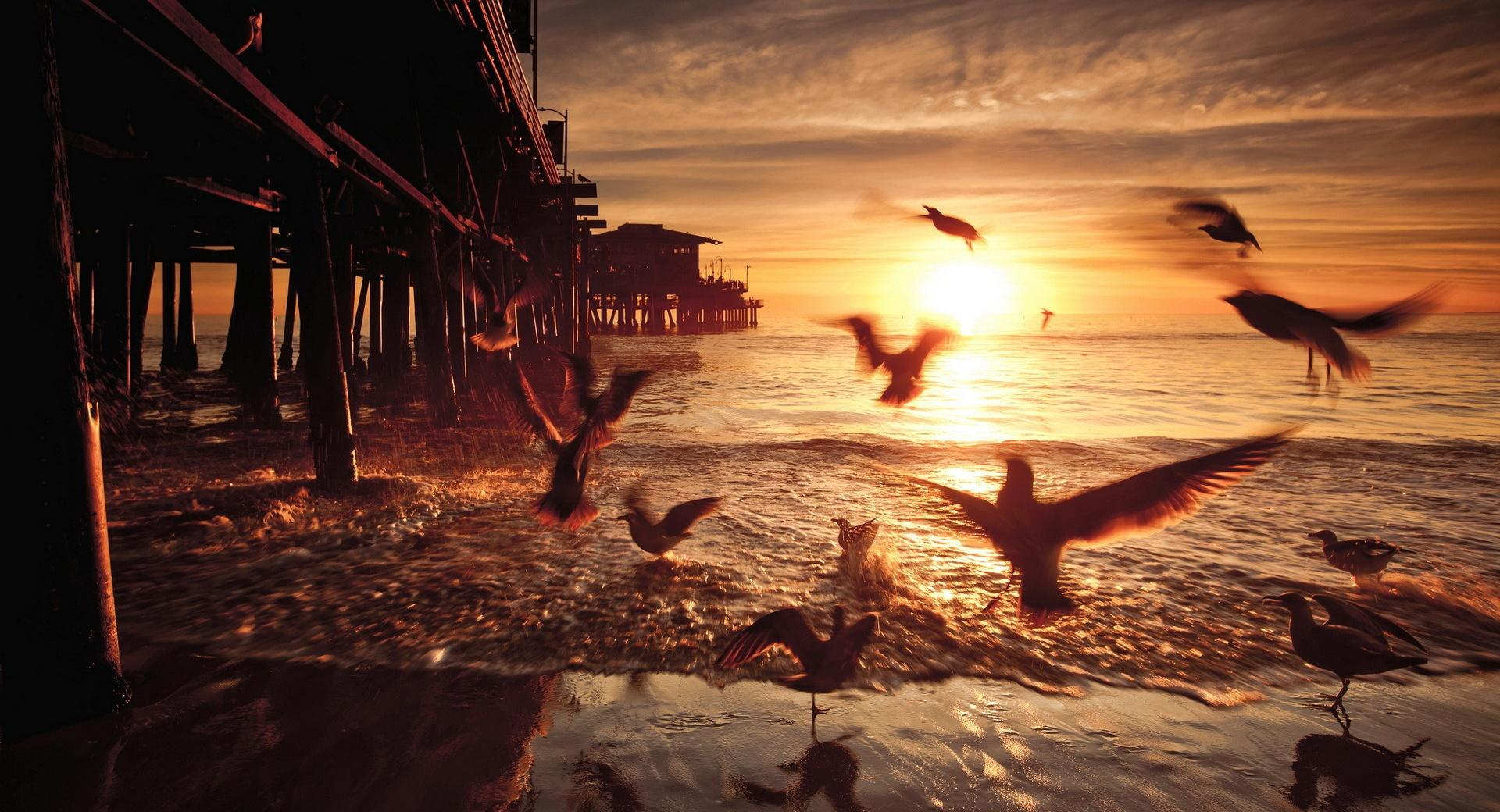 Sea and Fly Birds wallpapers HD quality
