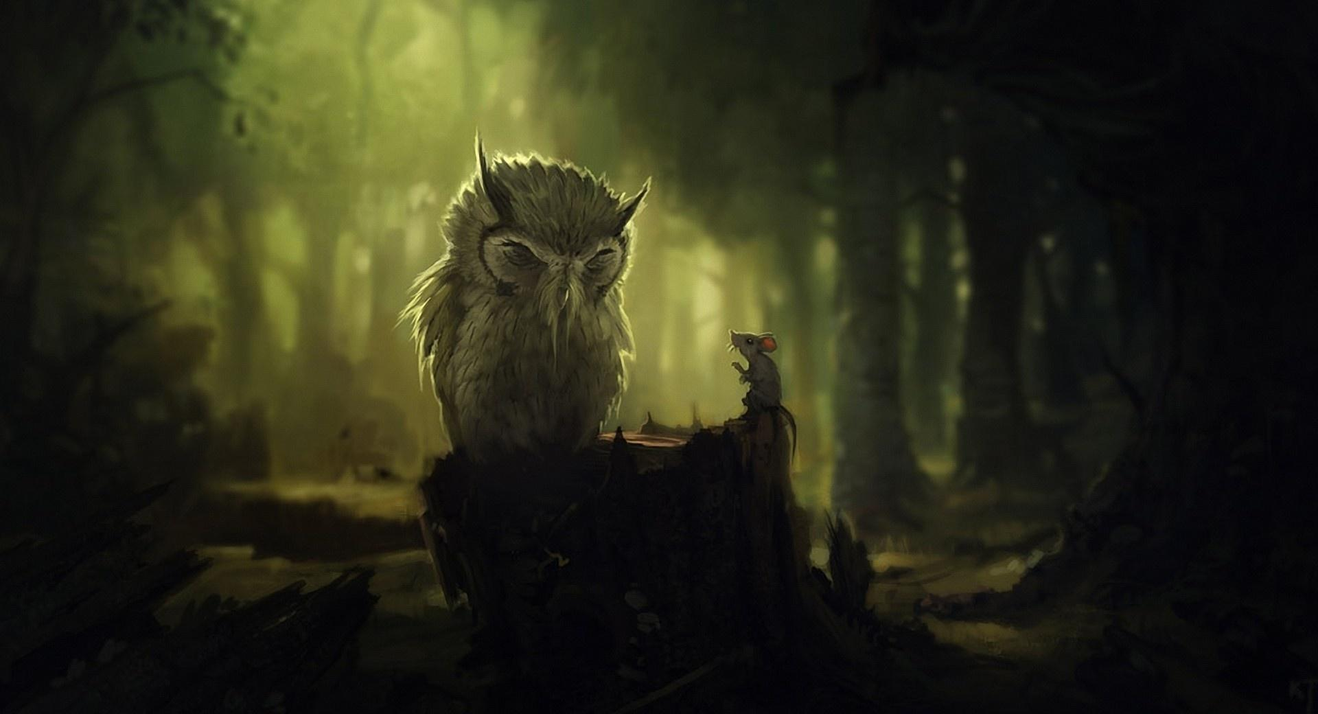 The Wise Owl wallpapers HD quality