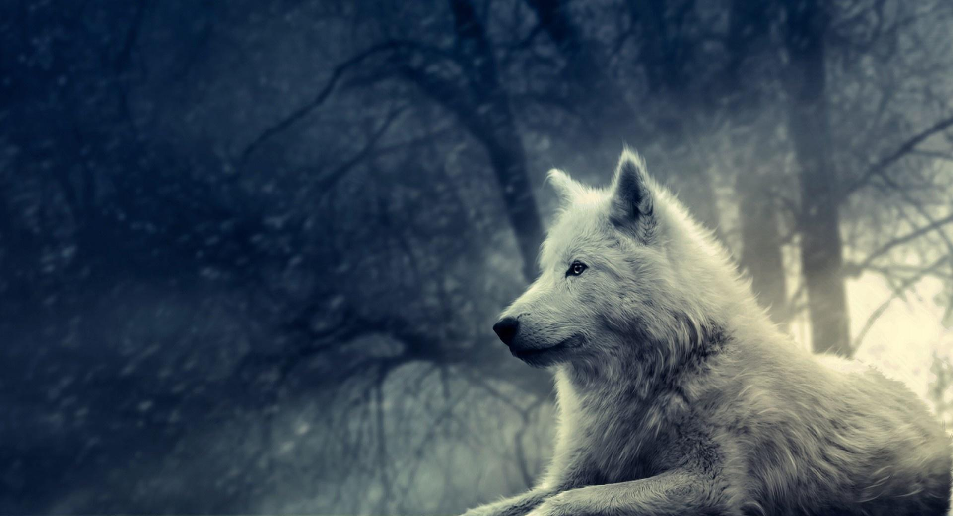 White Wolf Painting wallpapers HD quality