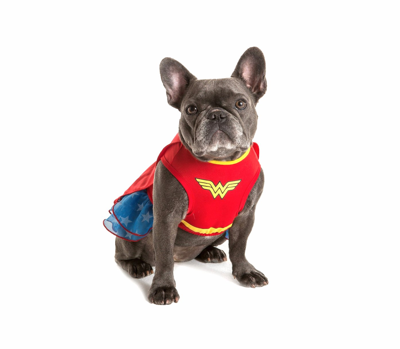 Wonder Dog wallpapers HD quality