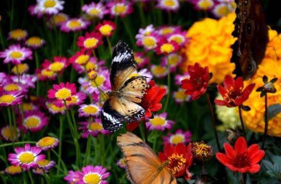 Butterfly and Colorful Flowers