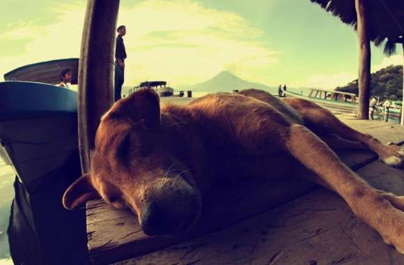 Dog Sleeping On A Pontoon