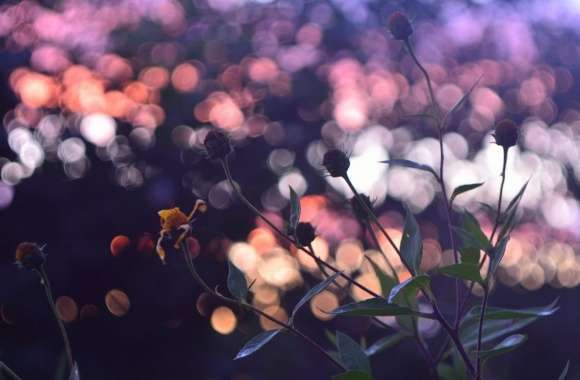 Evening Bokeh And Flowers