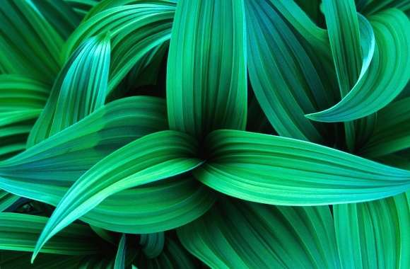 Exotic green leaves