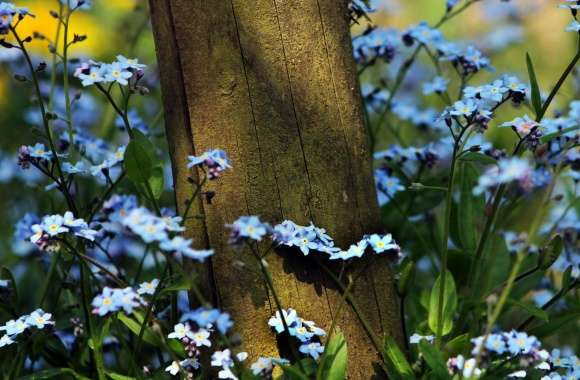 Forget Me Not Flowers Near A Wooden Pole