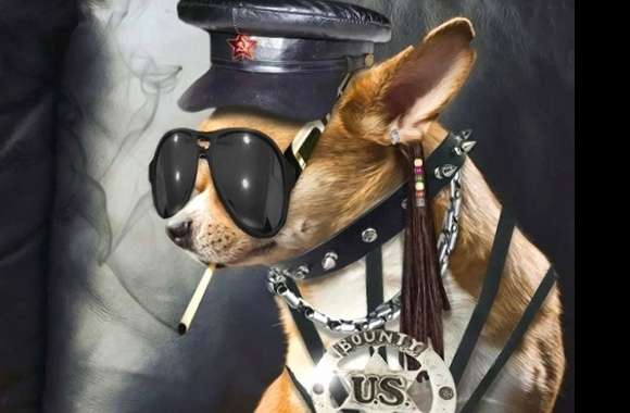 Funny dog badboy wallpapers hd quality