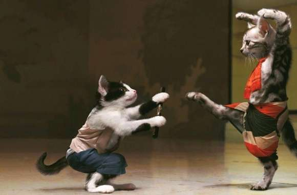 Funny karate cats wallpapers hd quality