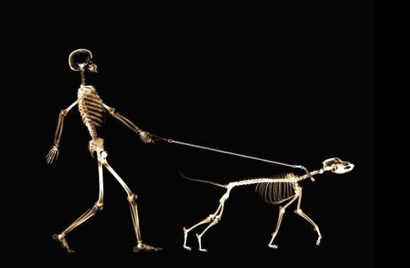 Funny man and dog x rays wallpapers hd quality