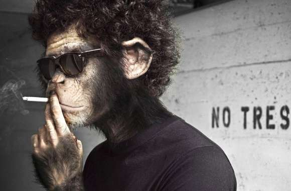 Funny smoking monkey like banksy wallpapers hd quality