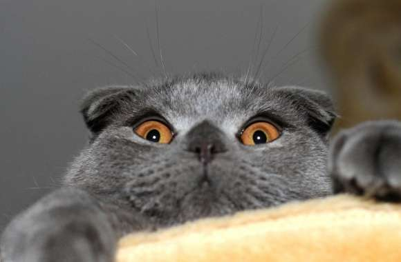 Funny terror eyes cat wallpapers hd quality