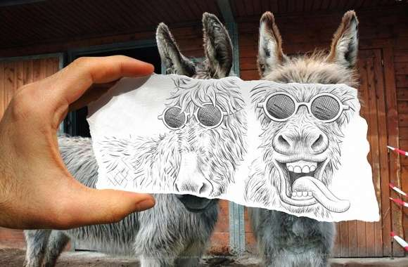 Funny two strange donkey wallpapers hd quality