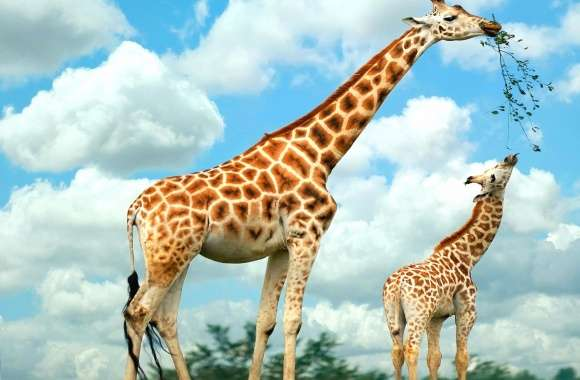 Giraffe mother and son