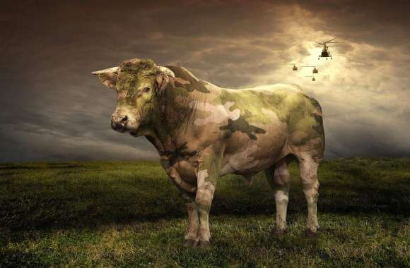 Military camouflage bull
