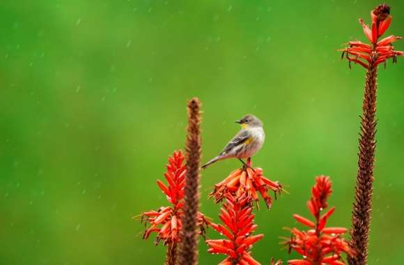 Small Bird Perched on an Aloe Flower in the Rain