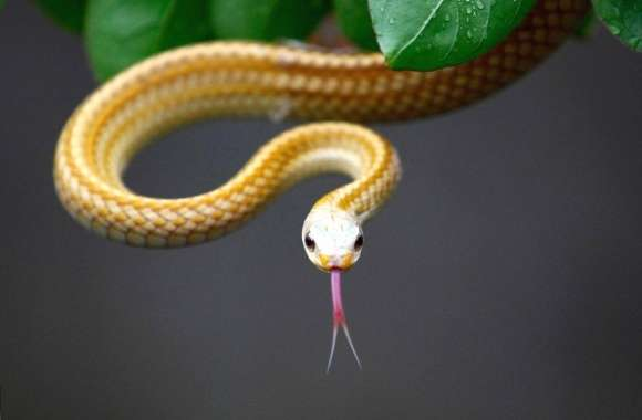 Thin yellow snake