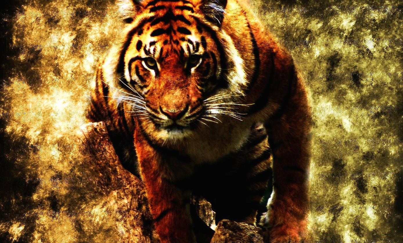 Abstract tiger wallpapers HD quality
