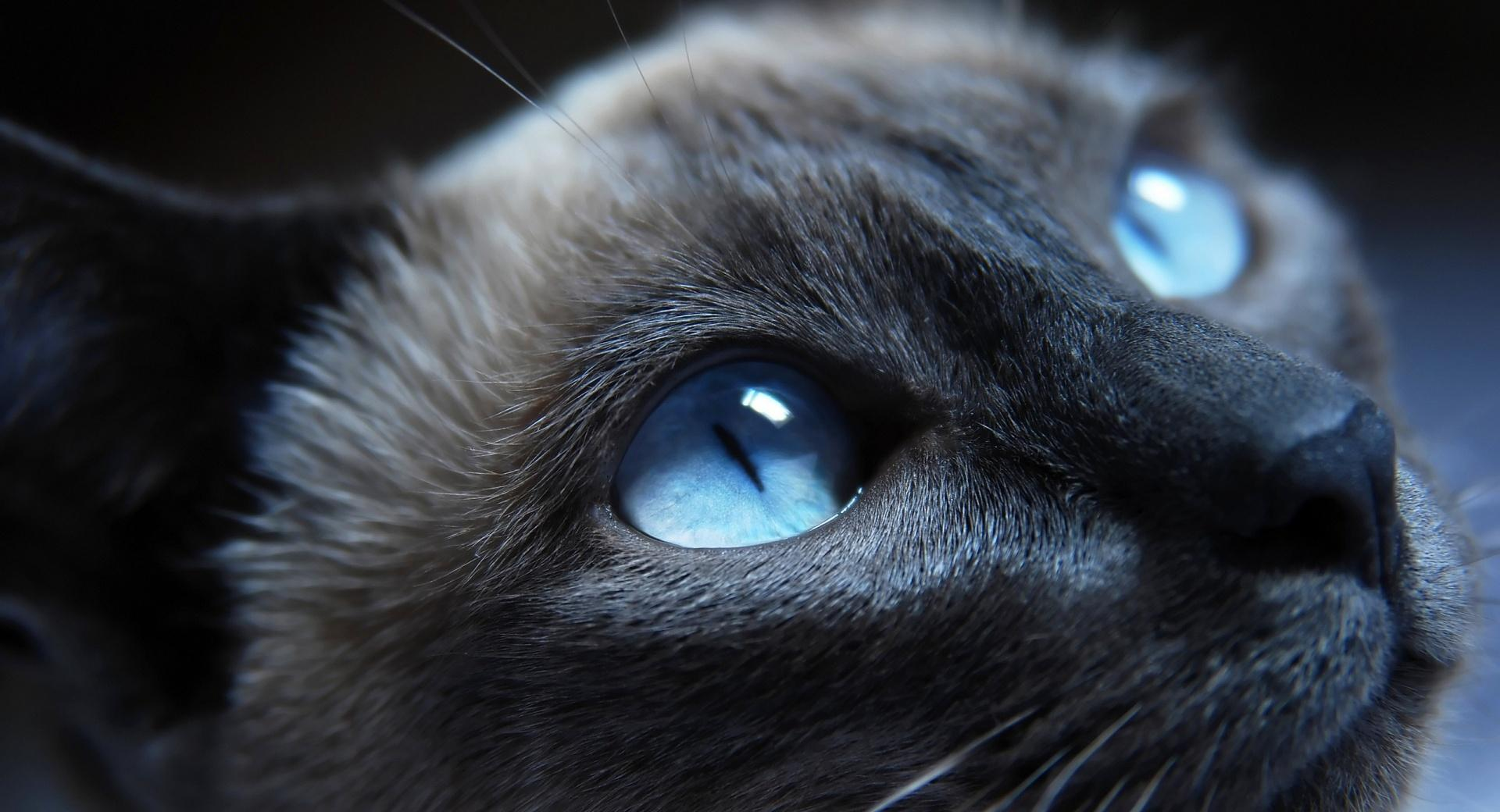 Beautiful Cat Portrait wallpapers HD quality