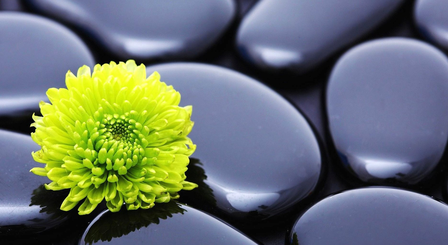 Black stones and yellow flower wallpapers HD quality