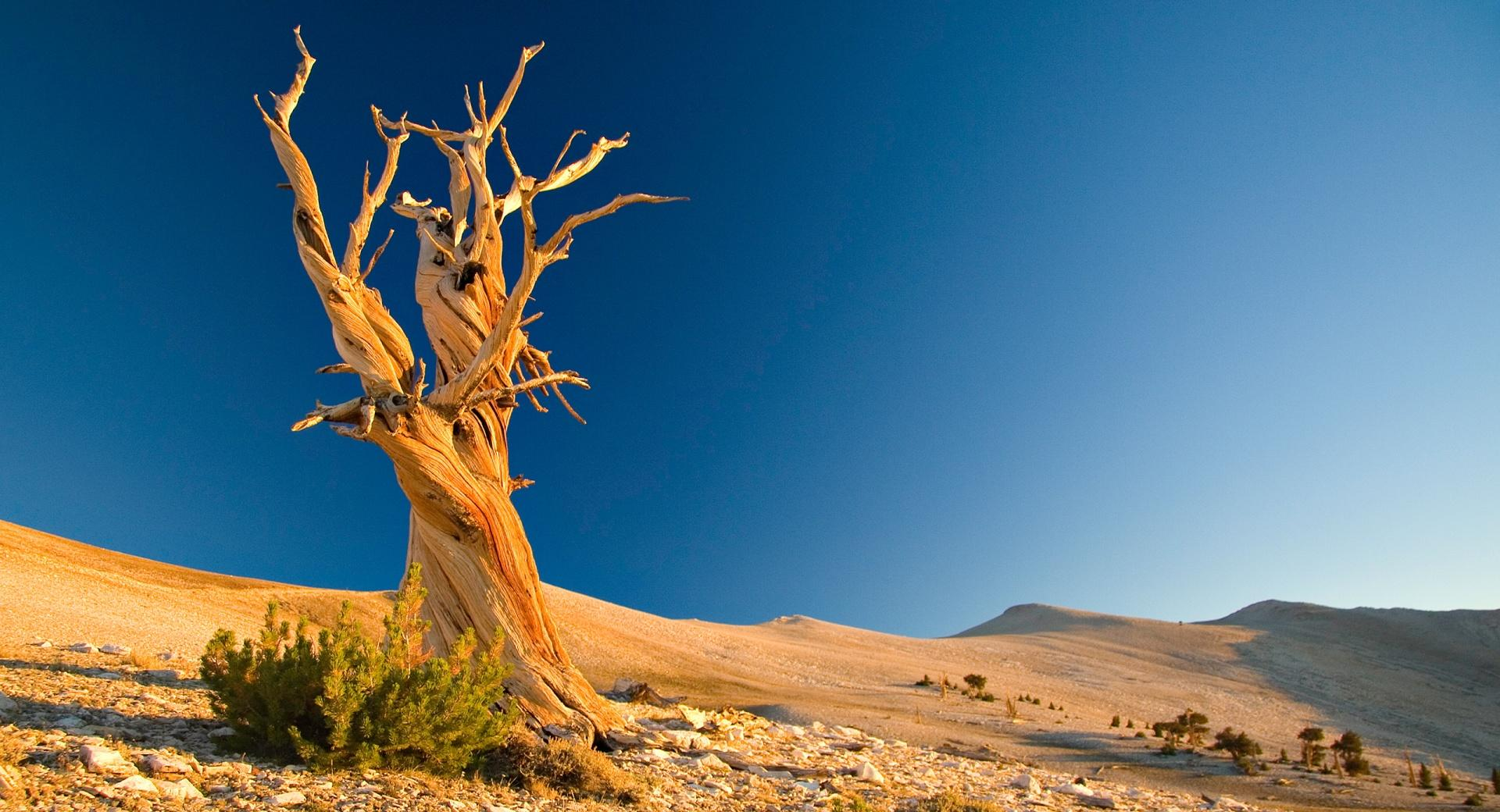 Desert Dead Tree wallpapers HD quality