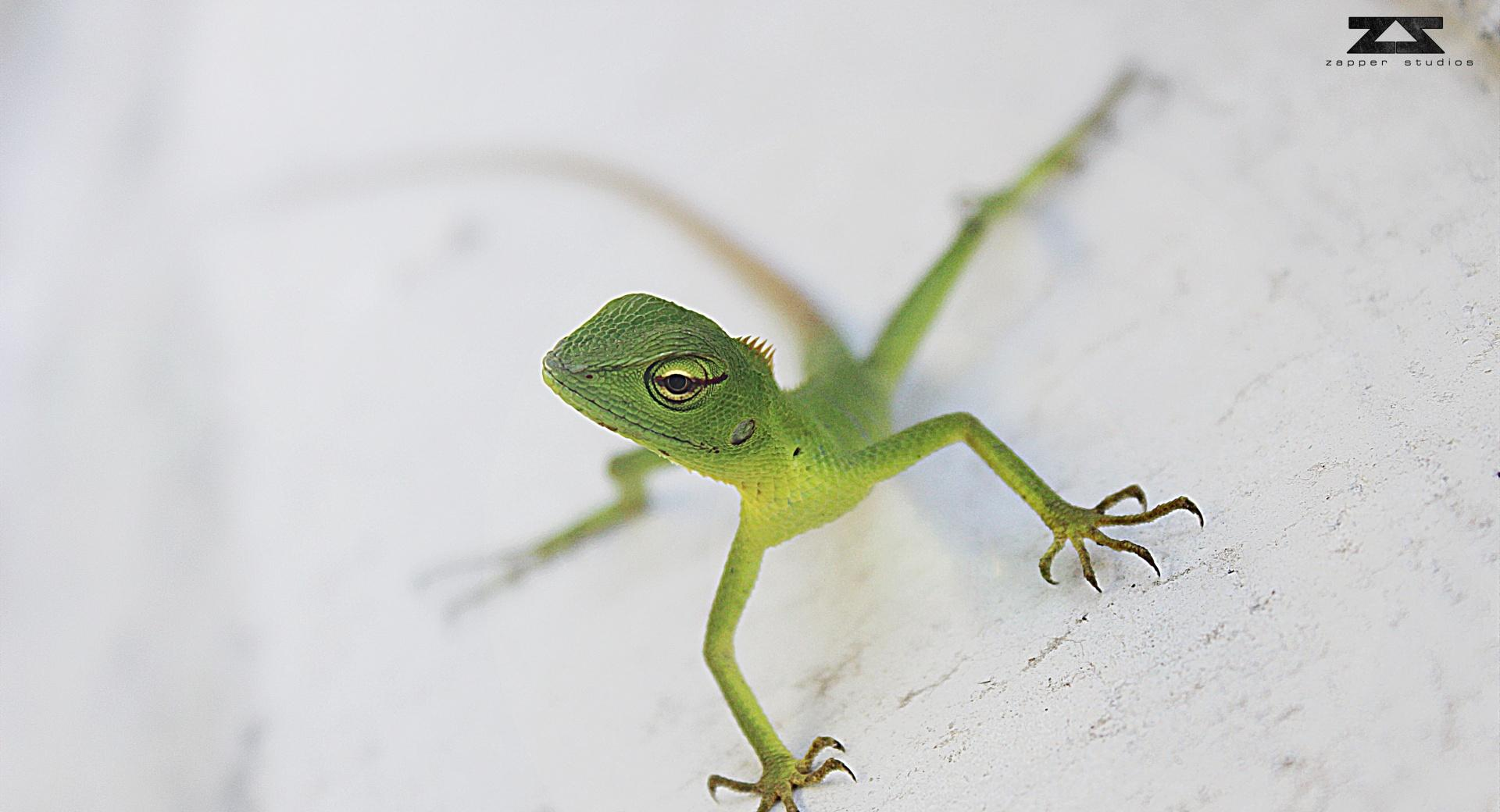 Everybody in Life is a Chameleon wallpapers HD quality