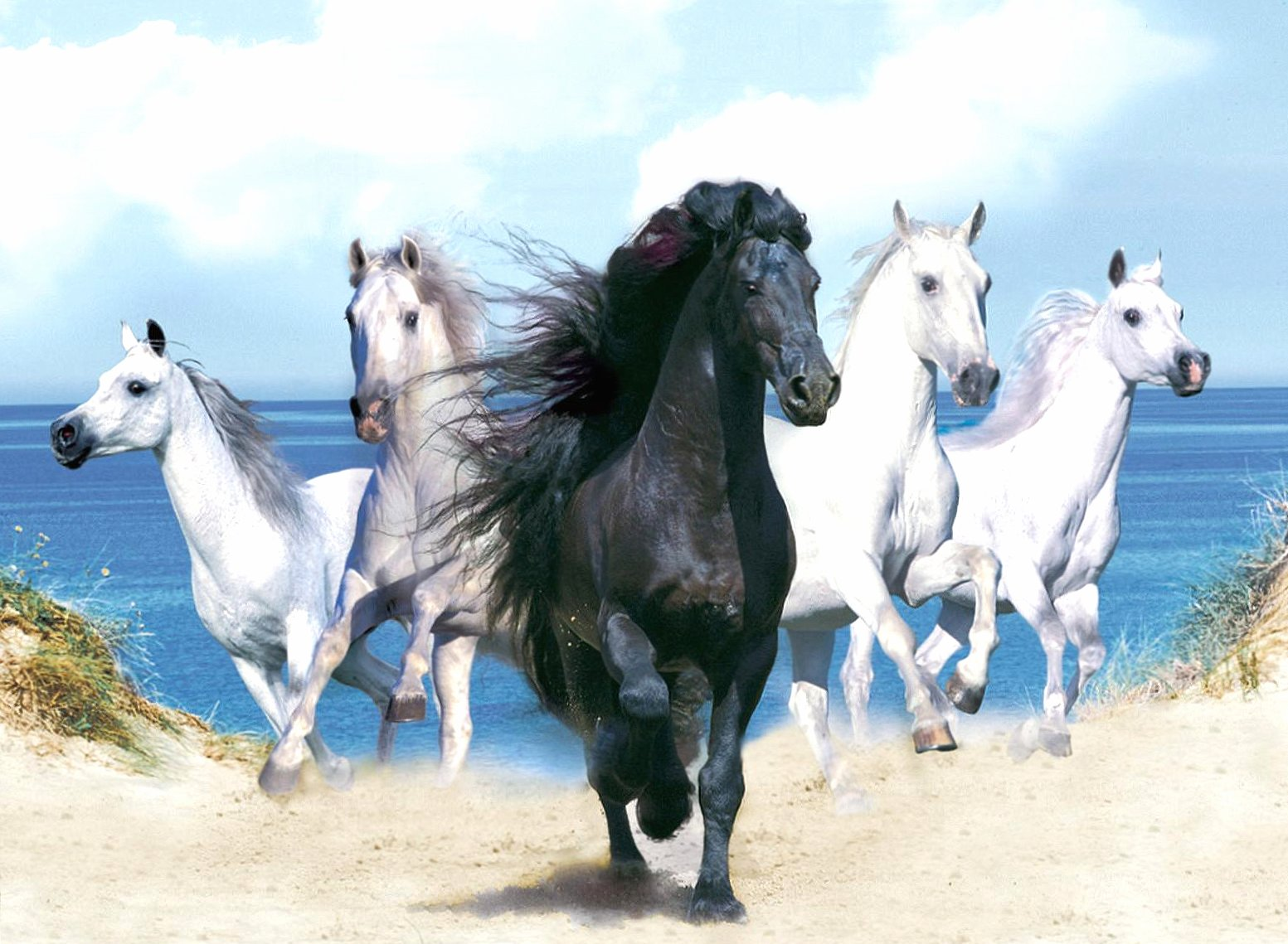 Five horses four white one black wallpapers HD quality