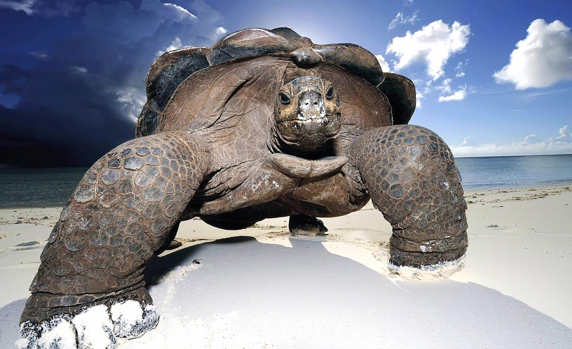 Galapagos giant tortoise wallpapers HD quality