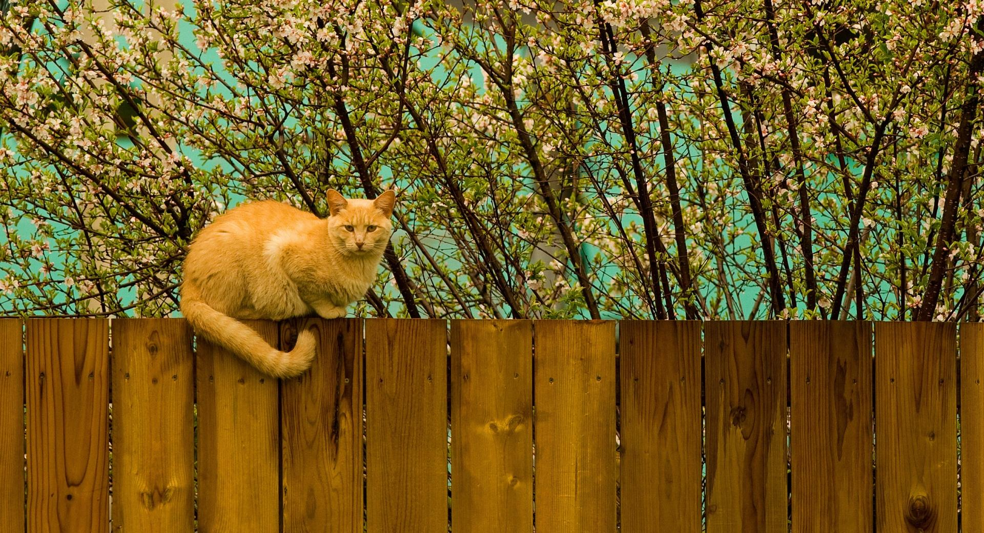Ginger Cat wallpapers HD quality