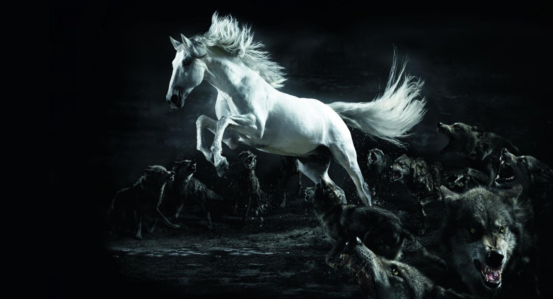 Horse and Wolves wallpapers HD quality