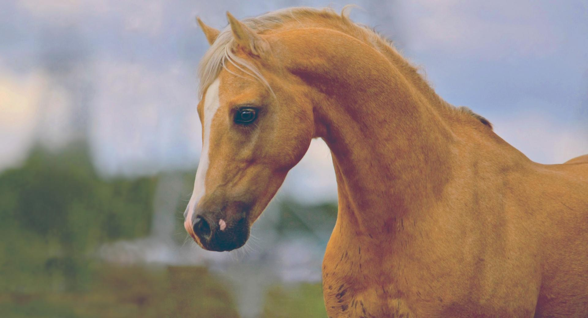 Horse Head wallpapers HD quality