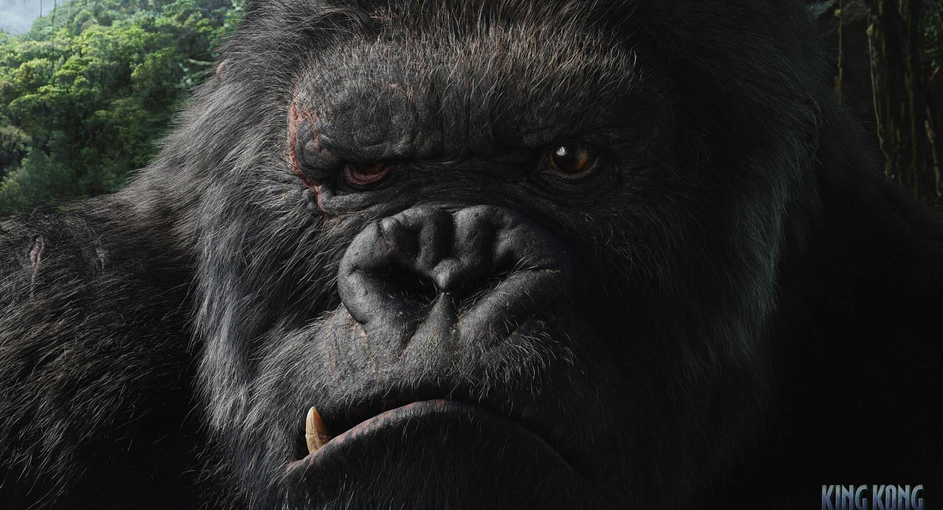 King Kong 2 at 320 x 480 iPhone size wallpapers HD quality
