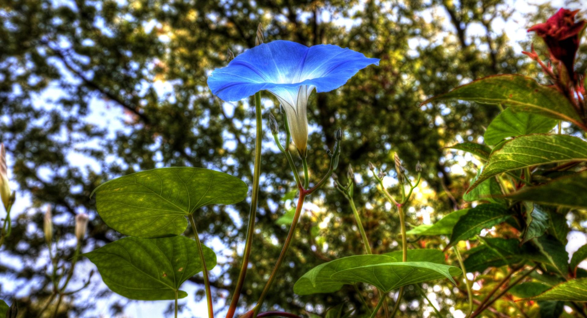 Morning Glory HDR wallpapers HD quality