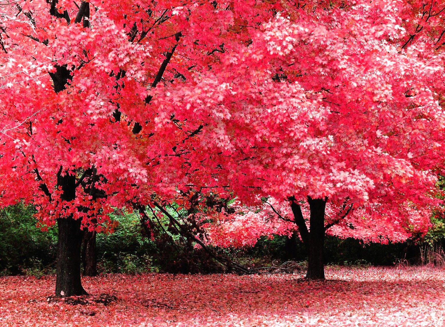 Pink tree wallpapers HD quality