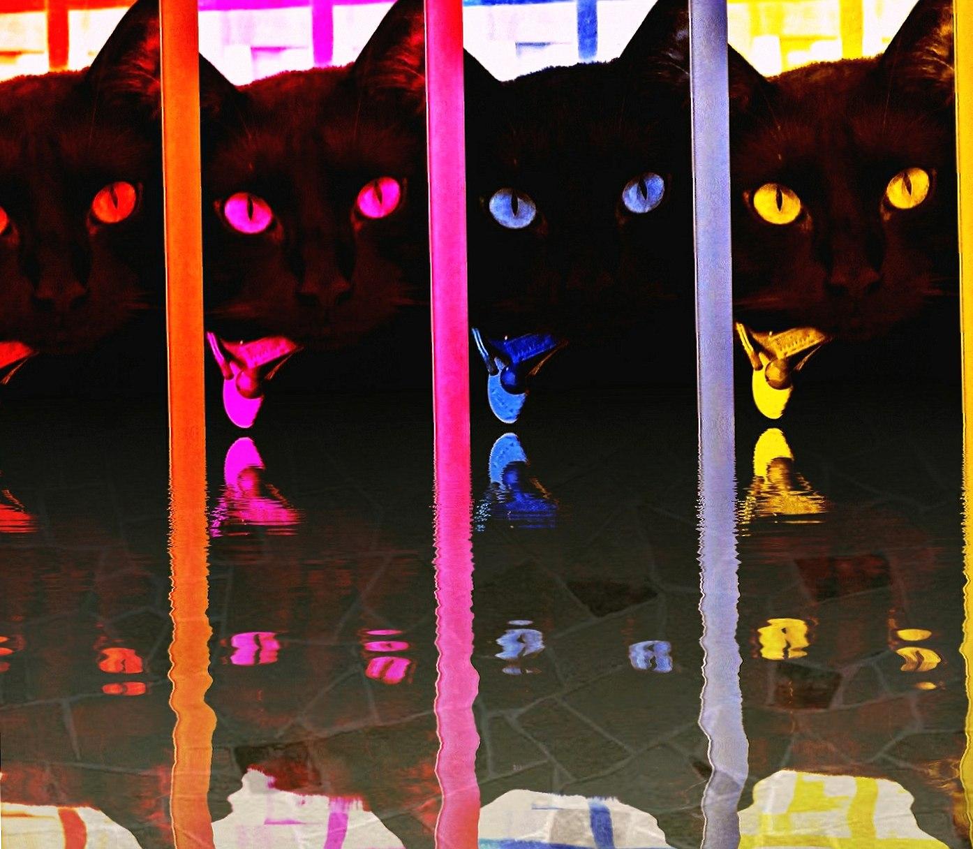 Rainbowblackcat2 wallpapers HD quality