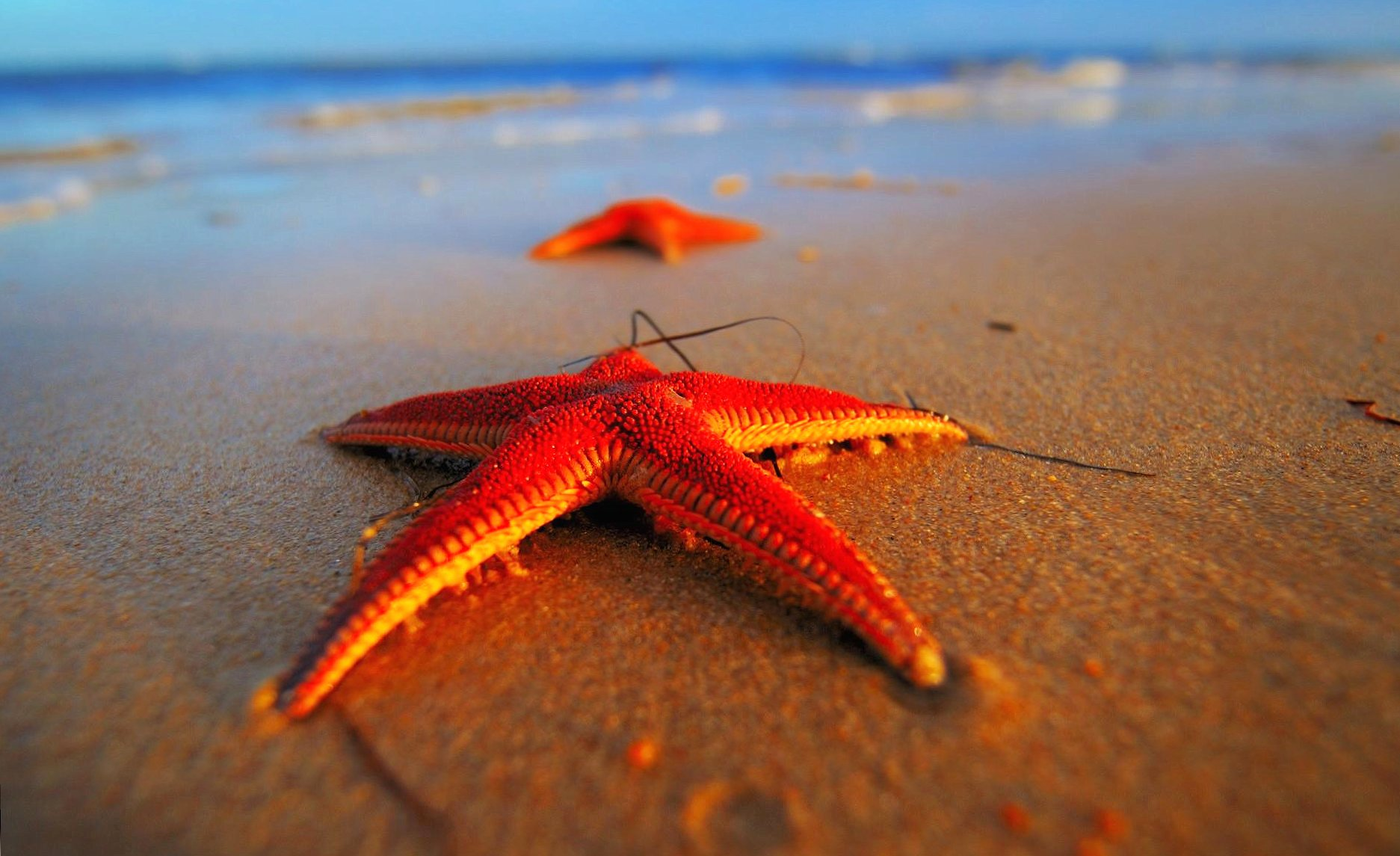 sea stars wallpapers HD quality
