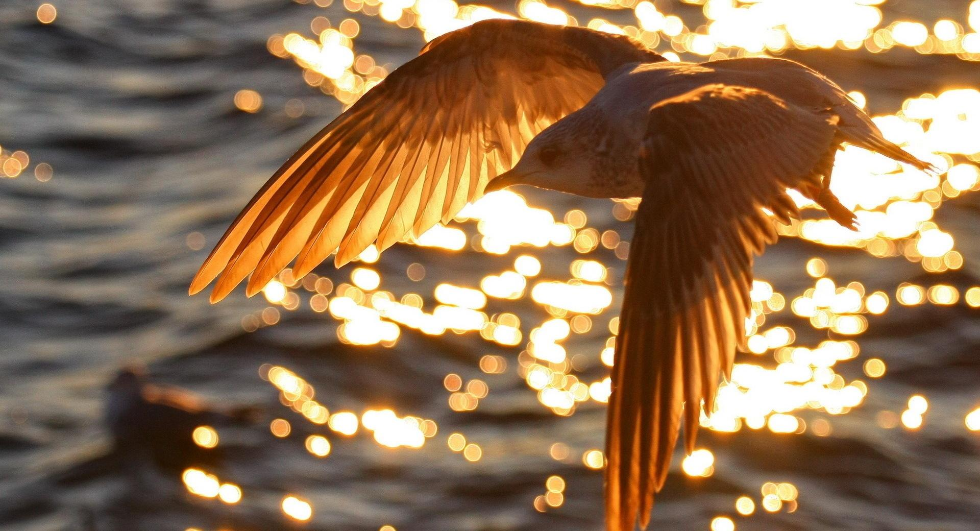 Seagull Flying wallpapers HD quality