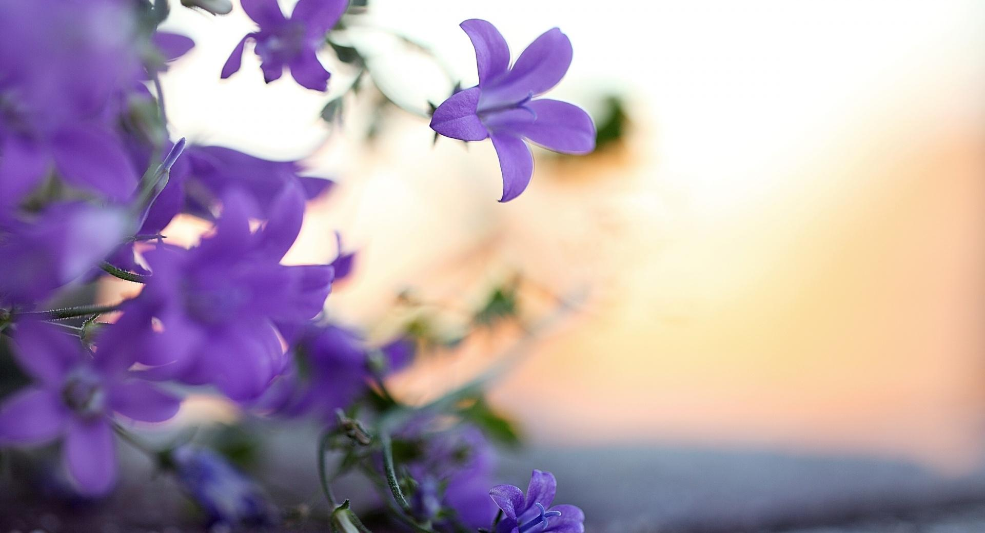 Small Violet Flowers wallpapers HD quality