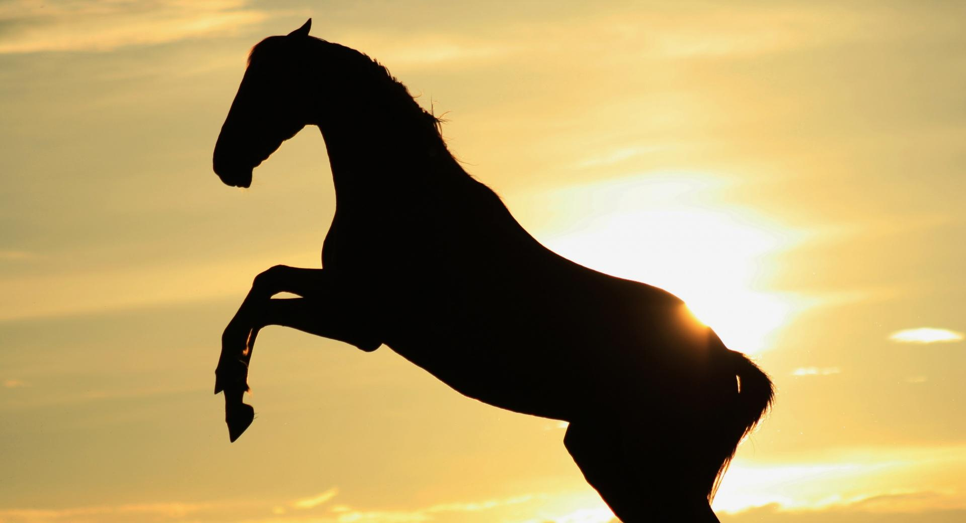 Sunset Horse wallpapers HD quality